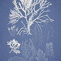 Symphocladia Gracilis  by Aged Pixel