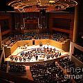 Symphony Orchestra by Luis Moya