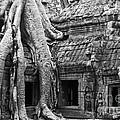 Ta Prohm Roots And Stone 01 by Rick Piper Photography