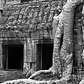 Ta Prohm Roots And Stone 02 by Rick Piper Photography