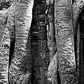 Ta Prohm Roots And Stone 04 by Rick Piper Photography