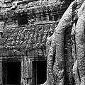 Ta Prohm Roots And Stone 05 by Rick Piper Photography