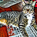 Tabby Cat On Newspaper - Catching Up On The News by Rebecca Korpita