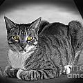 Tabby Cat by Terri Mills