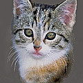 Tabby  Kitten An Original Painting For Sale by Bob and Nadine Johnston