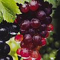 Table Grapes Closeup by Craig Lovell