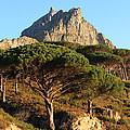 Table Mountain View by Aidan Moran