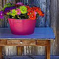 Table Top Flowers by Gary Richards