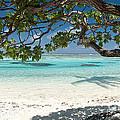 Tahitian Paradise by Jim Chamberlain