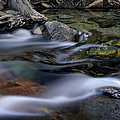 Tahoe Eagle River by Dave Dilli