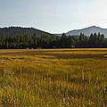 Tahoe Keys Meadow by Randy Wehner Photography