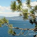 Tahoe Through The Pines by Spyglass Galleries -  Captain Layne