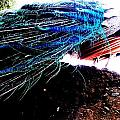 Tail Of Peacock by Vanessa Palomino
