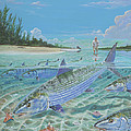 Tailing Bonefish In003 by Carey Chen