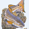 Tailing Redfish by Carey Chen