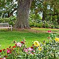 Take A Seat - Beautiful Rose Garden Of The Huntington Library. by Jamie Pham