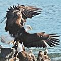 Take Flight by Barbara Mundt