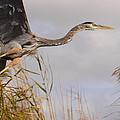 Taking Flight by Bruce J Robinson