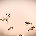 Taking Flight by John Lee