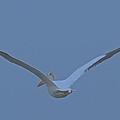 Taking Flight by Leanne Matson