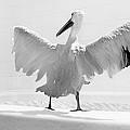 Taking The Plunge - Pelican - Bathroom by Nikolyn McDonald