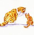 Talk To The Paw by Debra Hall