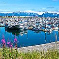 Tall Fireweed By The Marina Along Homer Spit-ak  by Ruth Hager
