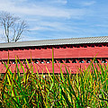 Tall Grass And Sachs Covered Bridge by Bill Cannon