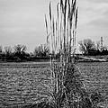 Tall Grass by Doug Long