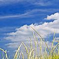Tall Grass On Sand Dunes by Elena Elisseeva