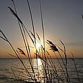 Tall Grass Sunset by Bill Cannon