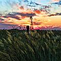 Tall Grass Windmill by Chris Harris