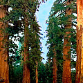 Tall Trees In Yosemite National Park by Bob and Nadine Johnston