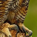 Talons Of Great Horned Owl by Adam Jones