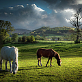 Talybont Ponies by Land And Light