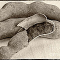 Tamarindo Whole Sepia by Iris Richardson