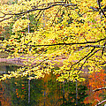 Tanasee Creek Lake And Yellow Tree by Duane McCullough