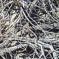 Tangled Desert Cedar  by The GYPSY