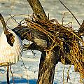 Tangled Driftwood by Georgette Grossman