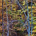 Tangled Tennessee by Matthew Winn