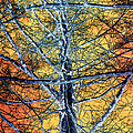 Tangled Web 2 by Shawna Rowe