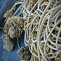Tangles Of Seaweed by Chalet Roome-Rigdon