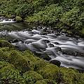 Tanner Creek by Erika Fawcett