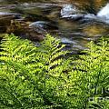 Tanner Creek In Spring by Stuart Gordon