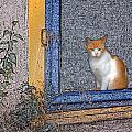 Taos Cat by Ana Gonzalez