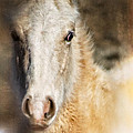 Taos Pony X by Charles Muhle