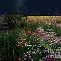 Tapestry In The Wild by RC DeWinter