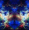Tarantula Reflection 1 by Jennifer Rondinelli Reilly - Fine Art Photography