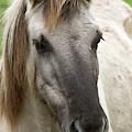 Tarpan Horse by Bob Gibbons