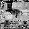 Tarquinia Muro Con Stemma by Giuseppe Cocco